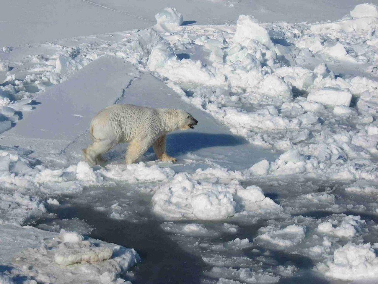 Scientific committee fingers climate change in latest species at risk assessments