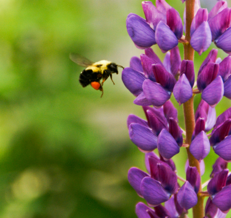 Plant colourful flowers to attract as much wildlife possible