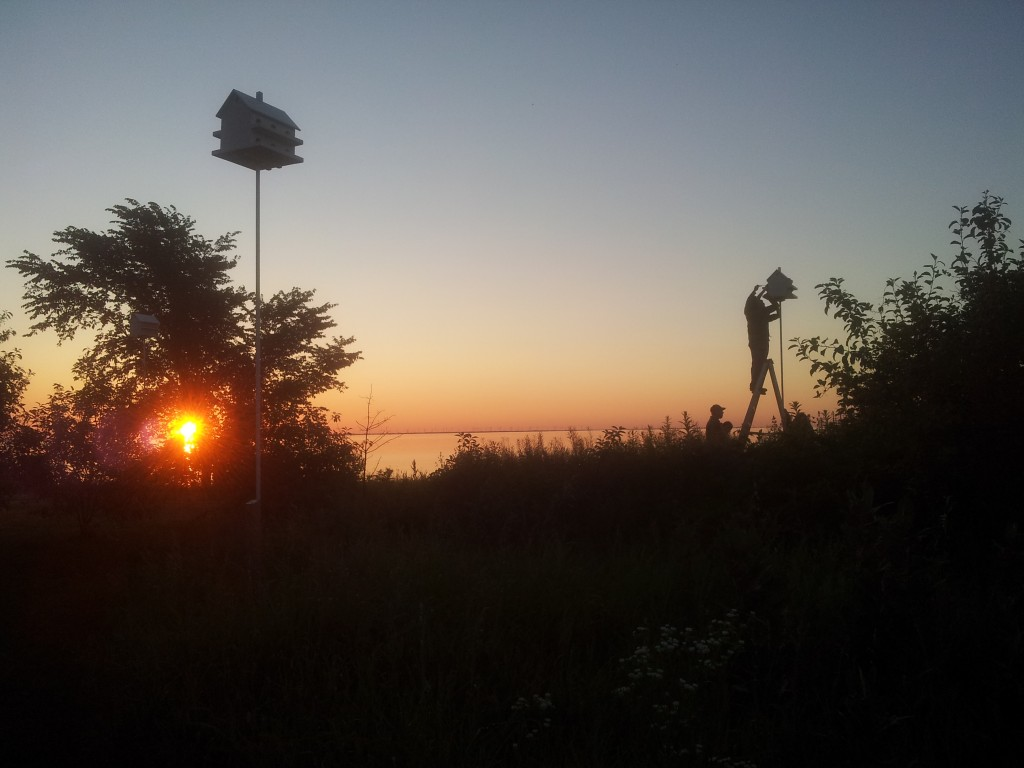 Fieldwork began at sunrise on Amherst Island (photo by Megan MacIntosh)