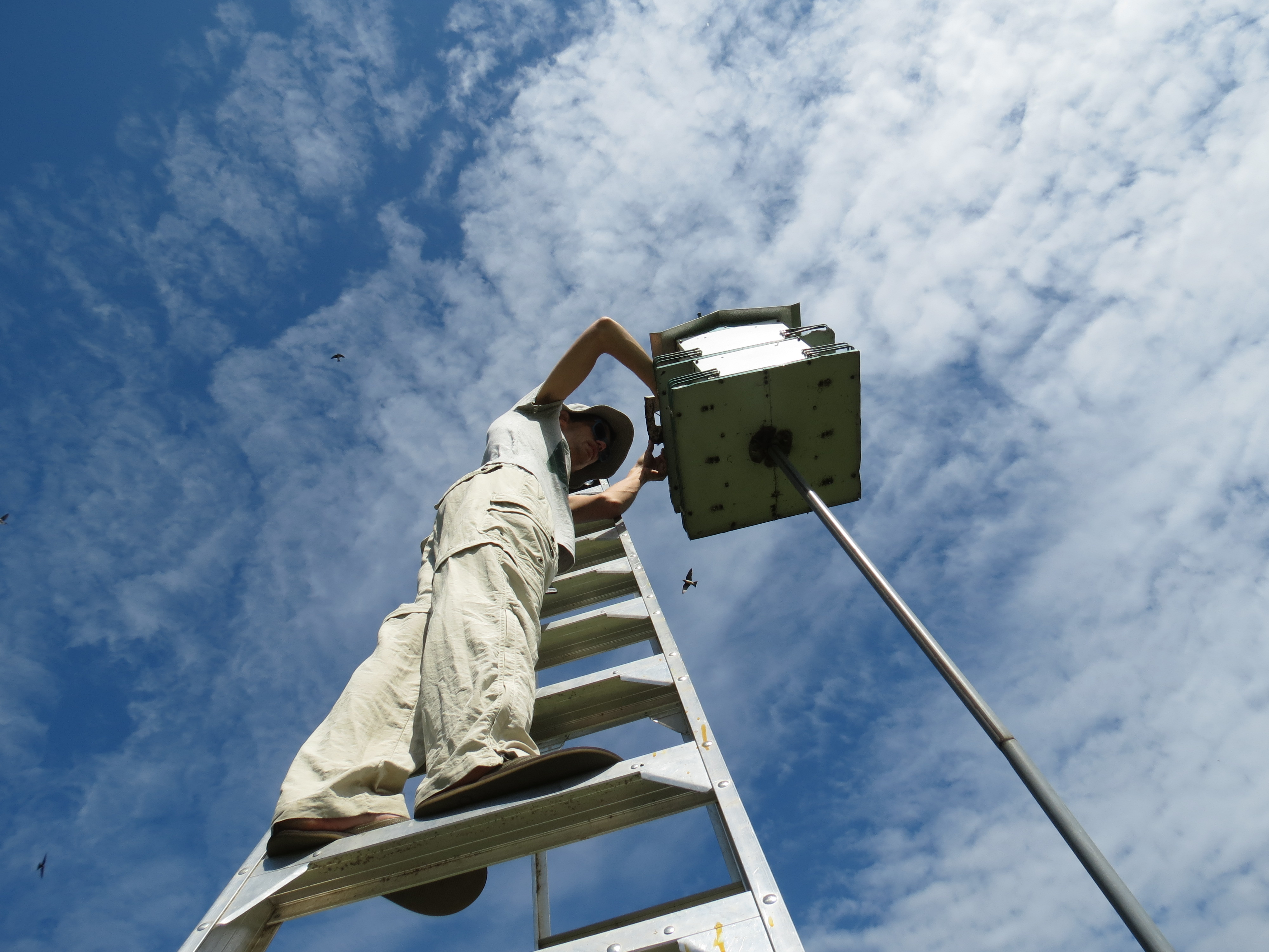 Purple Martin Project – Stories From the Field