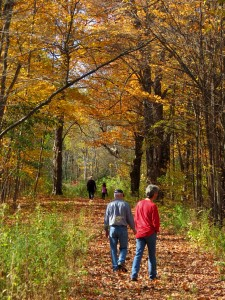 People walking in the forest