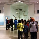 kids at museum looking at bird display