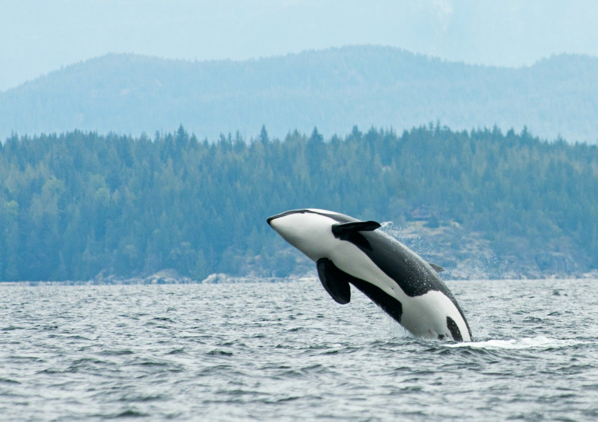 Update: Standing up for Nature in the Salish Sea
