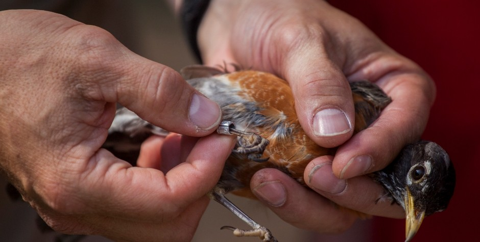 photo of bird banding