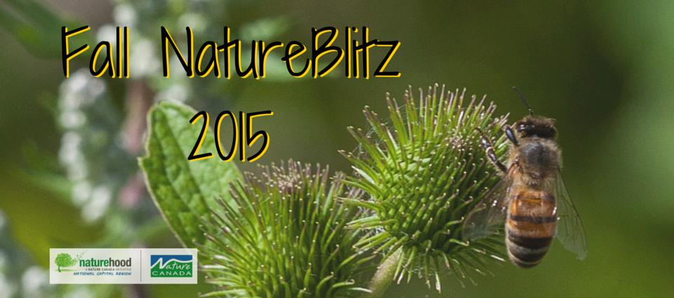 Join our 2015 Fall NatureBlitz at the Ottawa Forest & Nature School!