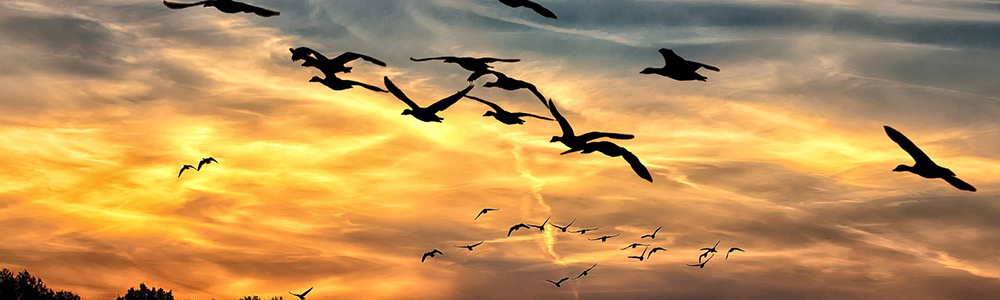 The world is lacking on the protection of migratory birds