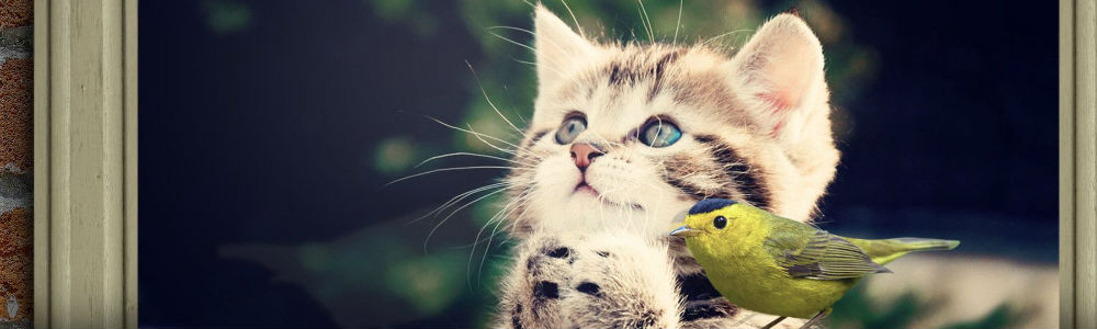 A cute cat and bird staring at something in the distance