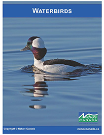 Image of Waterbirds cover e-Book