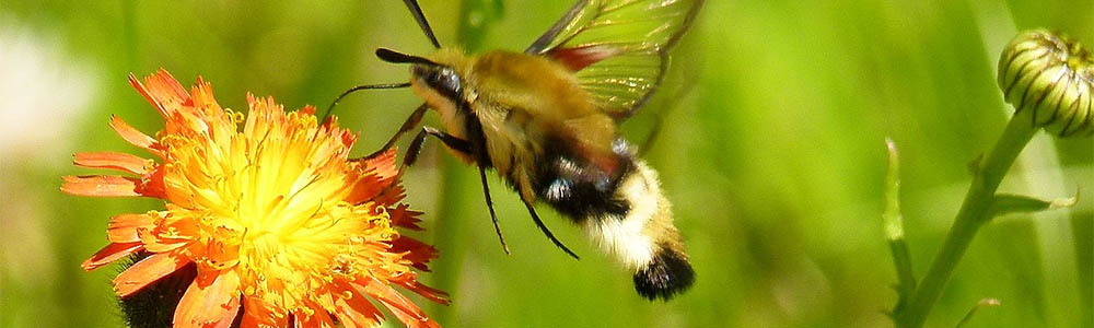Attract Pollinators to Your Garden!