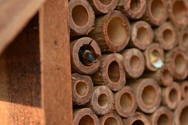 Image of a Mason Bee