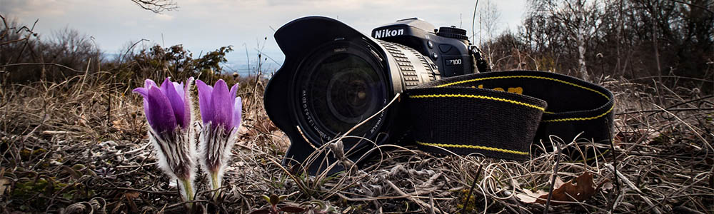 """Honing Your """"Fieldcraft"""": 10 Tips to Approaching Wildlife with a Camera"""