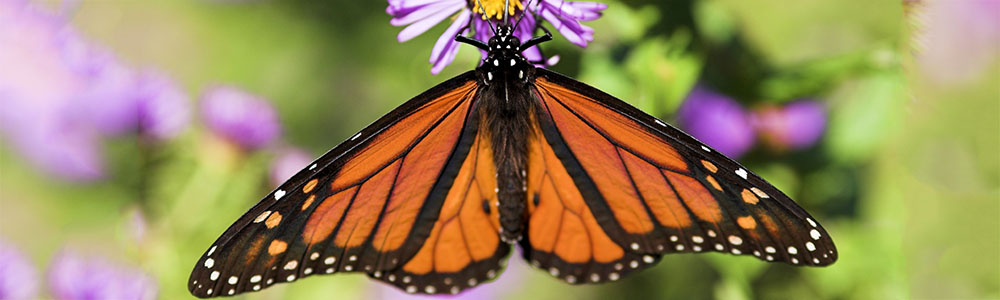 Recipe for a garden full of birds, butterflies and bees through native plants