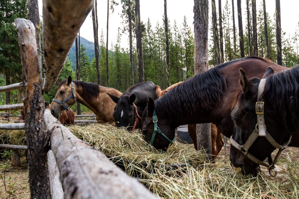 Image of horses eating