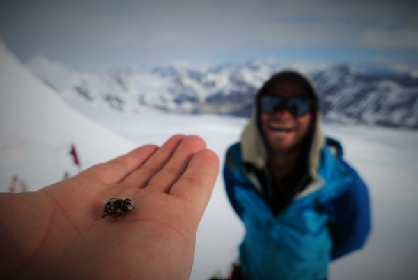 Image of a fly on Freshfields Icefield in Banff National Park