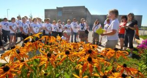 Image of Monarch Butterflies workshop