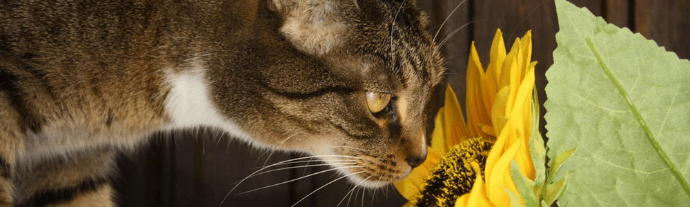 The Healthy Houseplant: Ten Feline-Friendly Selections