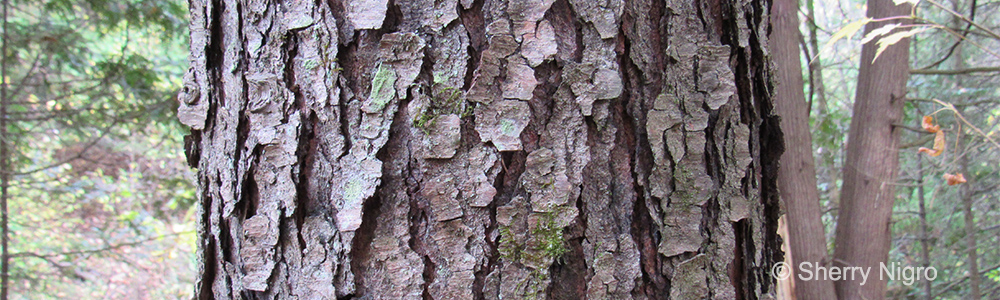 Image of a tree trunk