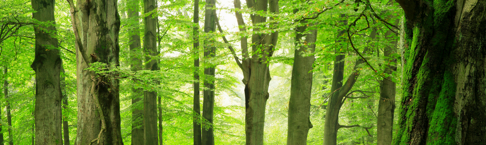 International Day of Forests: Saying Thank You to Our Tall, Green Protectors