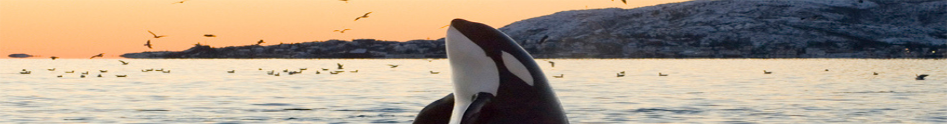Nature Canada reiterates call for Emergency Order to save Orcas