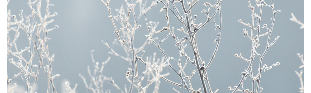 Mom Approved: Nature-Based Activities to Get Outside this Winter!