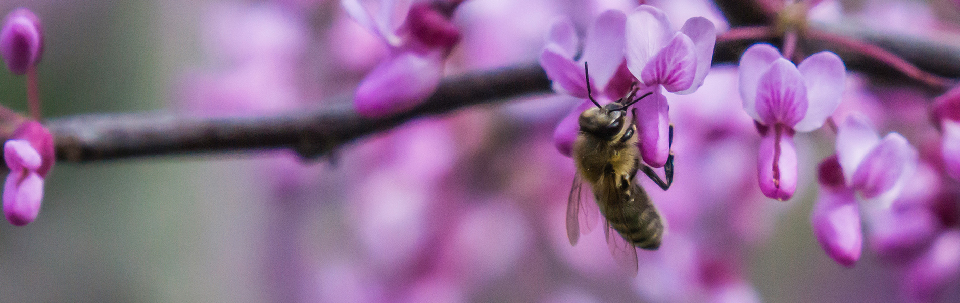 European Union Neonic Ban to Protect Bees