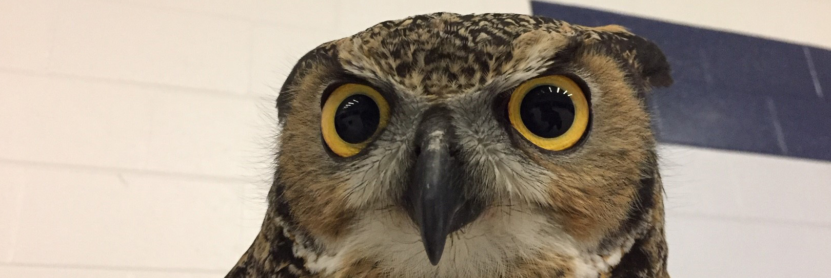 Ottawa Students get up close with birds of prey