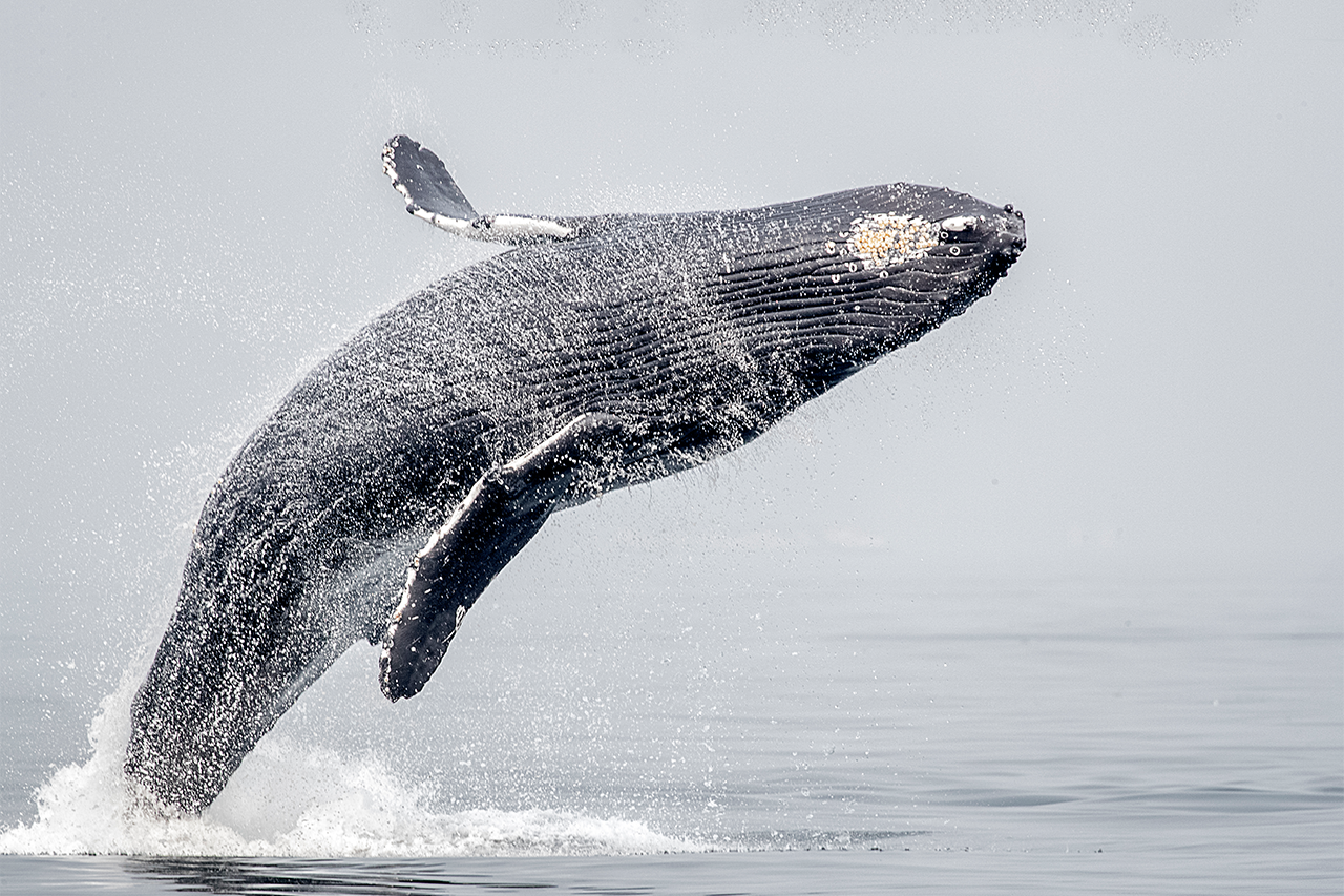 Press release: Nature Canada applauds protection of the Laurentian Channel and strong new standards for marine protected areas