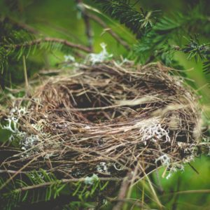 Image of an empty birds nest