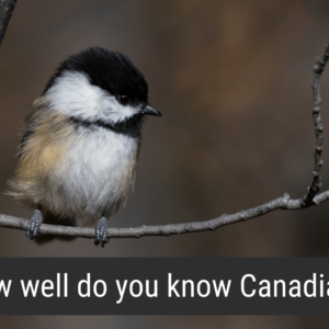 Image of a Black-capped Chickadee