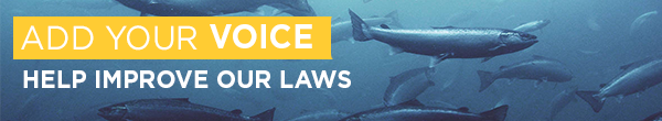 Sign the Nature Canada petition to update CEPA to prevent damage to wild salmon