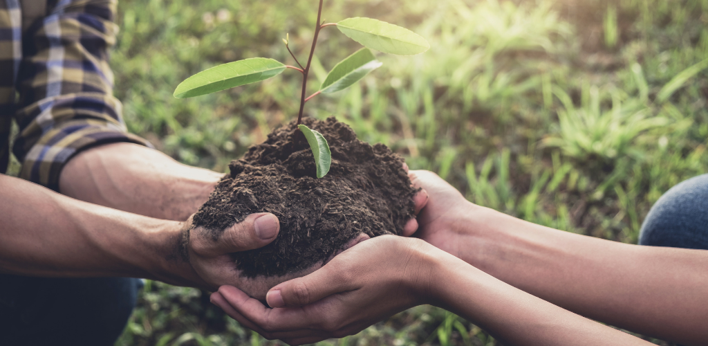 Image of two people holding a tree sapling.
