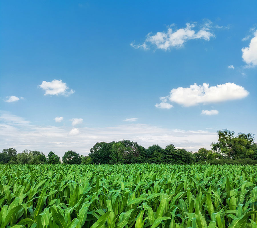 nbcs-agriculture-img-02