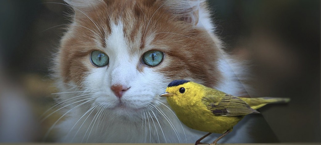 Welcome to Keep Cats Safe & Save Bird Lives!