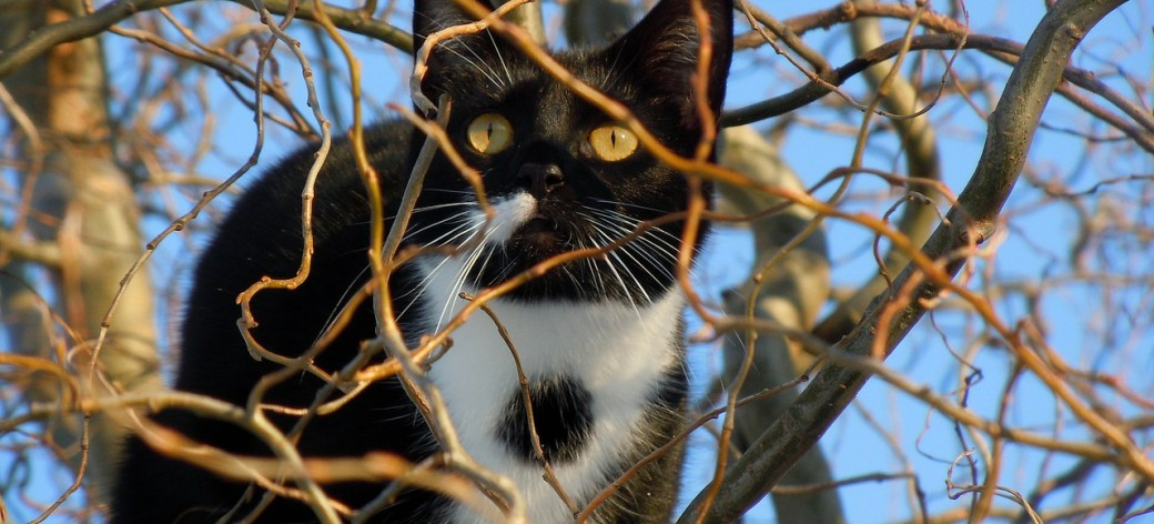 Cats Impact Birds Even if They Don't Hunt