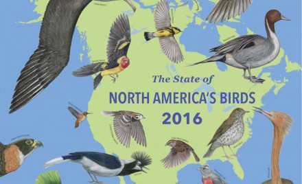 The State of North American Birds (2016)