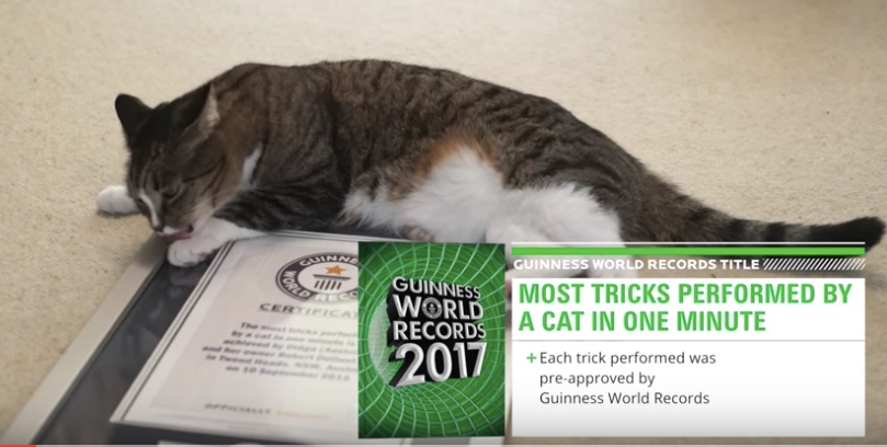 World Record Holding Cats