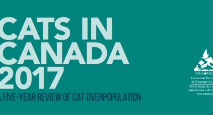 An Update on Cats in Canada