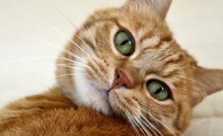 Why Your Vet Wants You to Keep Your Cat Indoors
