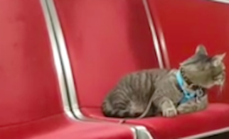 Dwayne the Adventure Cat Rides the TTC