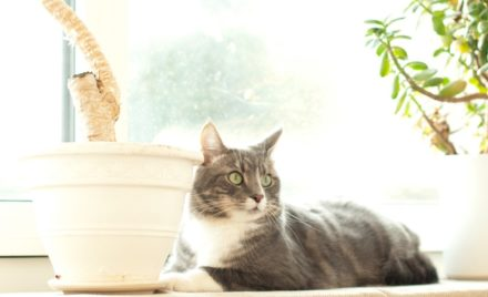 A Guide to Cat-Friendly House Plants